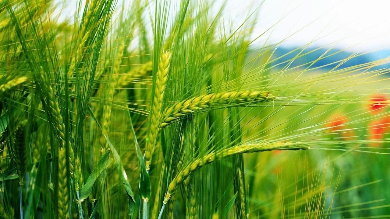COVID-19: Земеделските производители уверяват обществеността за продоволствена сигурност